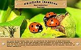 Vgo... 30 Marienkäfer Larven gegen Blattläuse