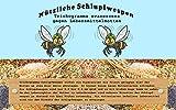 VGO... Schlupfwespen  5 Kärtchen mit je 2000 Schlupfwespen zur Bekämpfung von Lebensmittelmotten Einzellieferung
