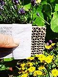 Novo Nem® Florfliegenlarven 150 Stück in Pappwabe gegen Blattläuse, Spinnmilben, Thrips, Wollläuse u. a.