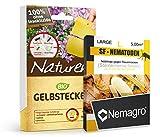 Nemagro KOMBIPACK gegen Trauermücken SF-Nematoden L + Naturen® Gelbtafeln - Für 25 Pflanzen
