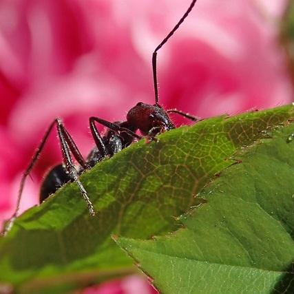 Ameisen Rasen Blumentopf, Terrasse Garten