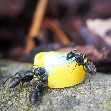 Ameisenmittel Test