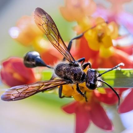 fliegende ameisen bek mpfen hausmittel vorbeugungstipps. Black Bedroom Furniture Sets. Home Design Ideas