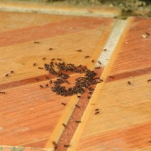 Ursachen Ameisen Haus Wohnung