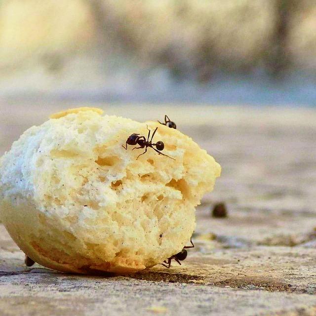 Ameisen in der Küche töten