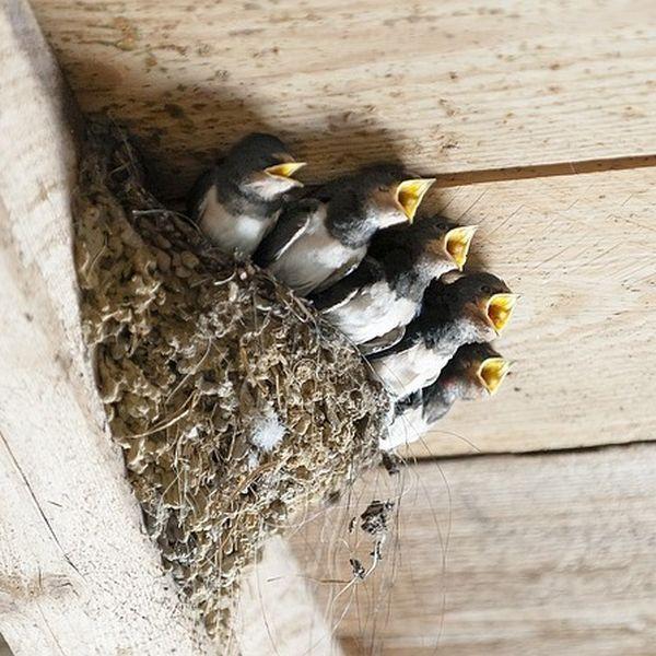Wespe Fressfeinde Vögel