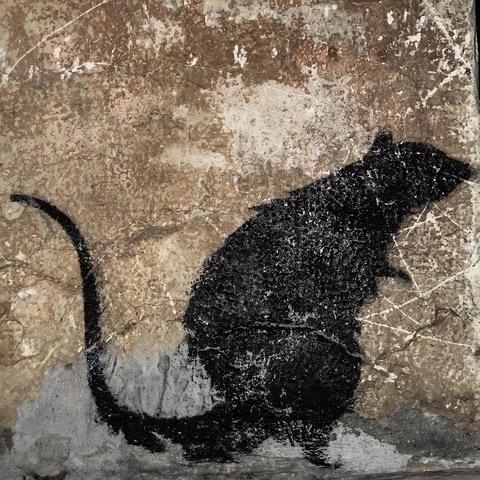 Ratten Meldepflicht