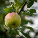 Apfelwickler-Spritzmittel
