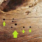 Holzwurm erkennen Holzwurmloch Spuren